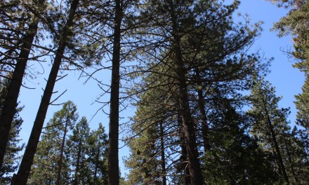 Idyllwild – Beautiful and Majestic