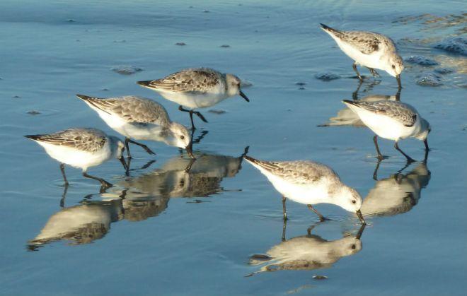Birds at Nantasket Beach