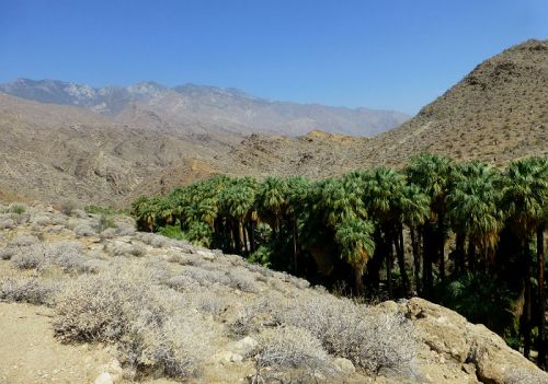 View over Palm Canyon