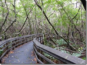 everglades_west_lake_trail1.jpg