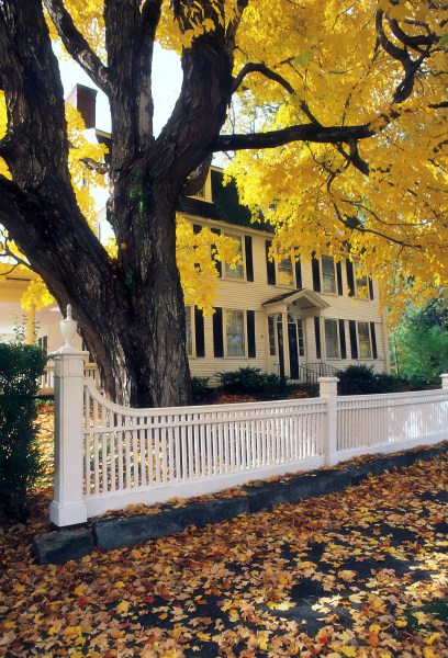 CONNECTICUT, USA - CIRCA 1985: White fence in front of a colonial style home in Autumn with an old Maple tree covered with yellow leaves circa 1985 in Connecticut, USA. Colorful leaves are scattered on the ground.