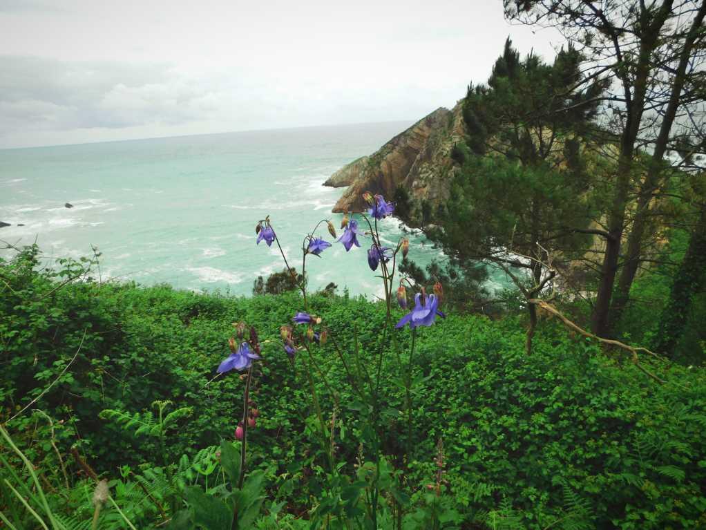 Nature around Playa de Silencio