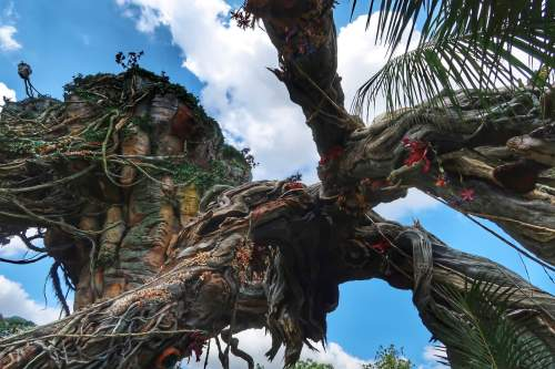 Pandora World of Avatar at Disney's Animal Kingdom