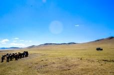 Horses watering at a affluent of Kherlen river