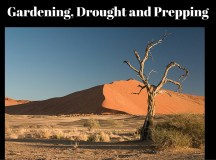 Gardening, Drought and Prepping