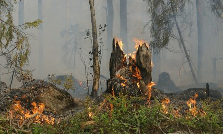 A Simple Step To Save You Home From A Forest Fire