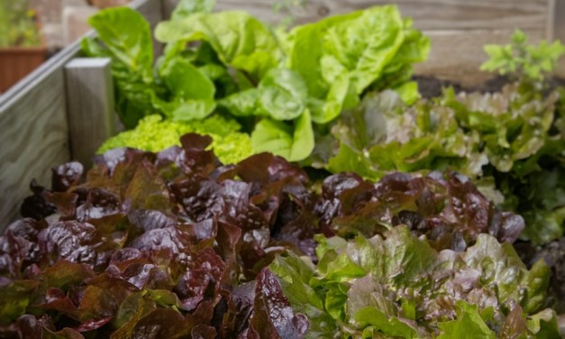 Raised Bed Vegetable Garden Cheat Sheet