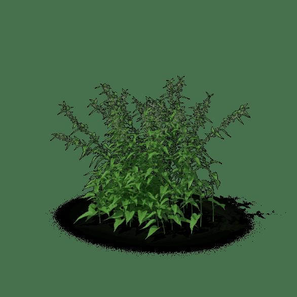 Nettle Grass