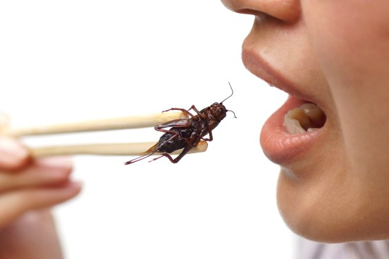 Crickets For Protein
