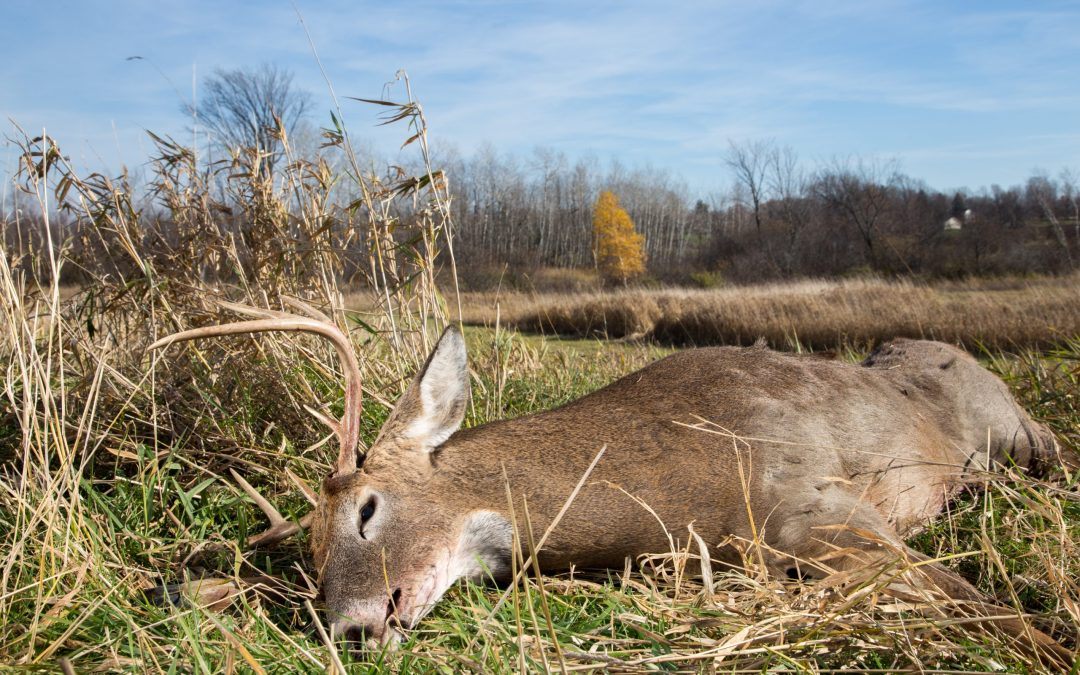 How Long Can You Wait To Field Dress A Deer?