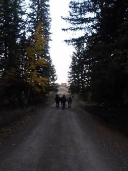 billyhorses1