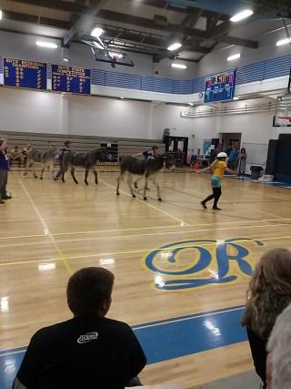 DonkeyBasketball1