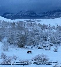 Horse_in_Snow110217