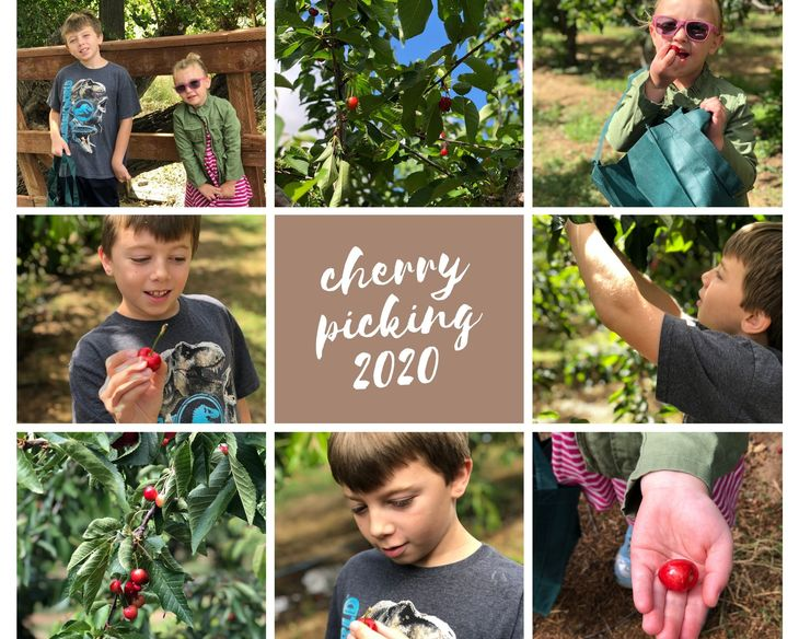 8 photos of us cherry picking at the cherry farm