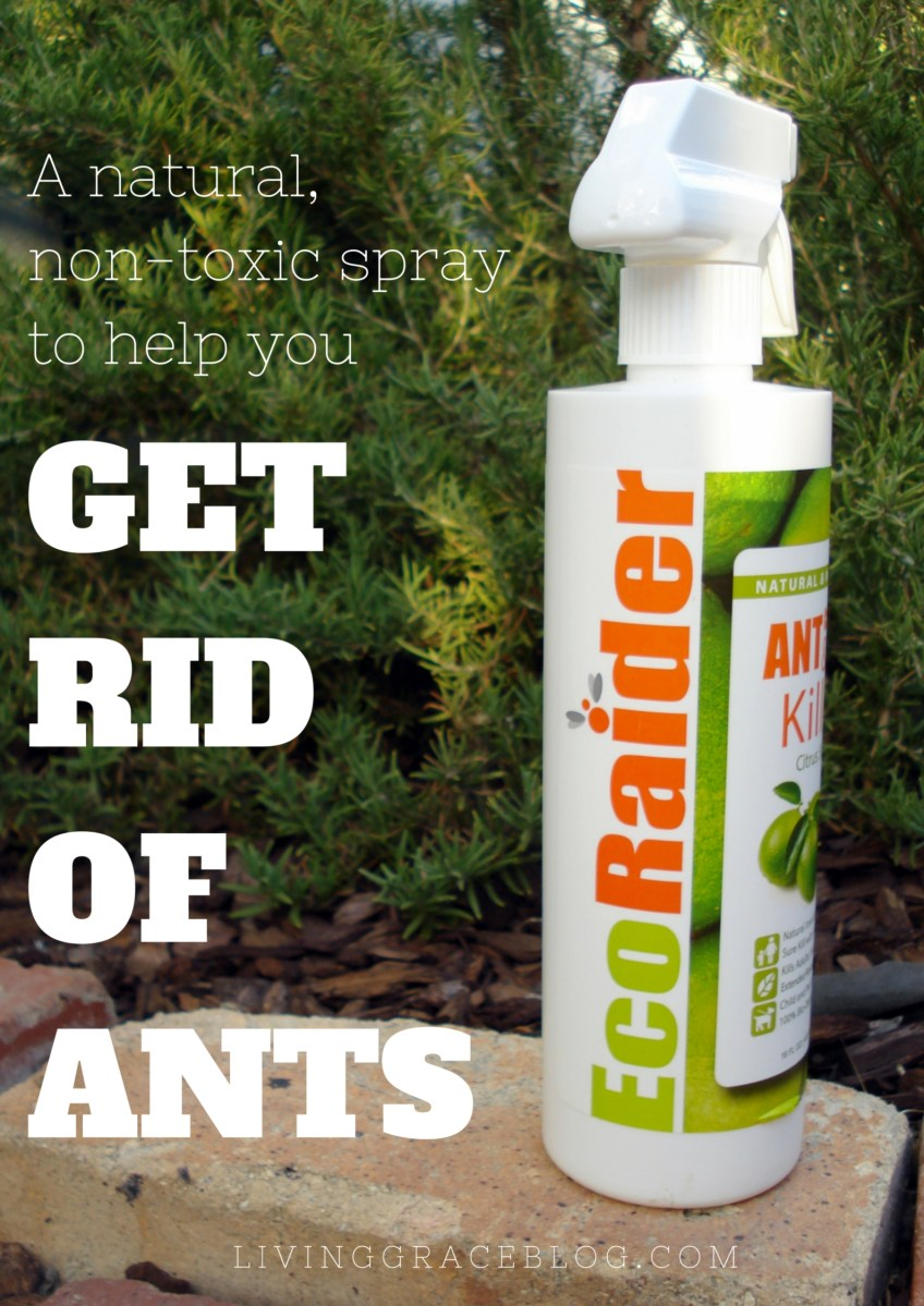 EcoRaider Non-Toxic Ant Spray Review: Sorry, not sorry, ants.