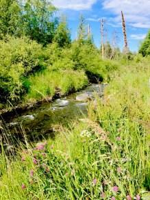 Pretty creekside camping spot