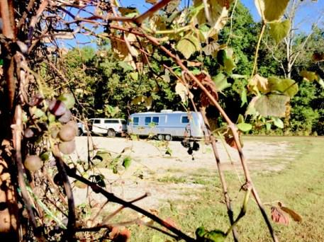 Fall fruit at DelMonaco