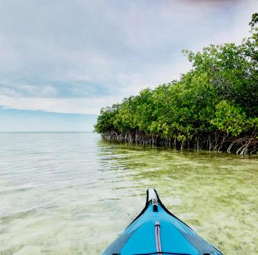 Mangroves at Curry Hammock