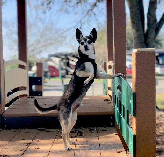 Lazy Days dog park