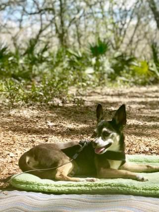 Serenova Tract Florida Water Management District Campground