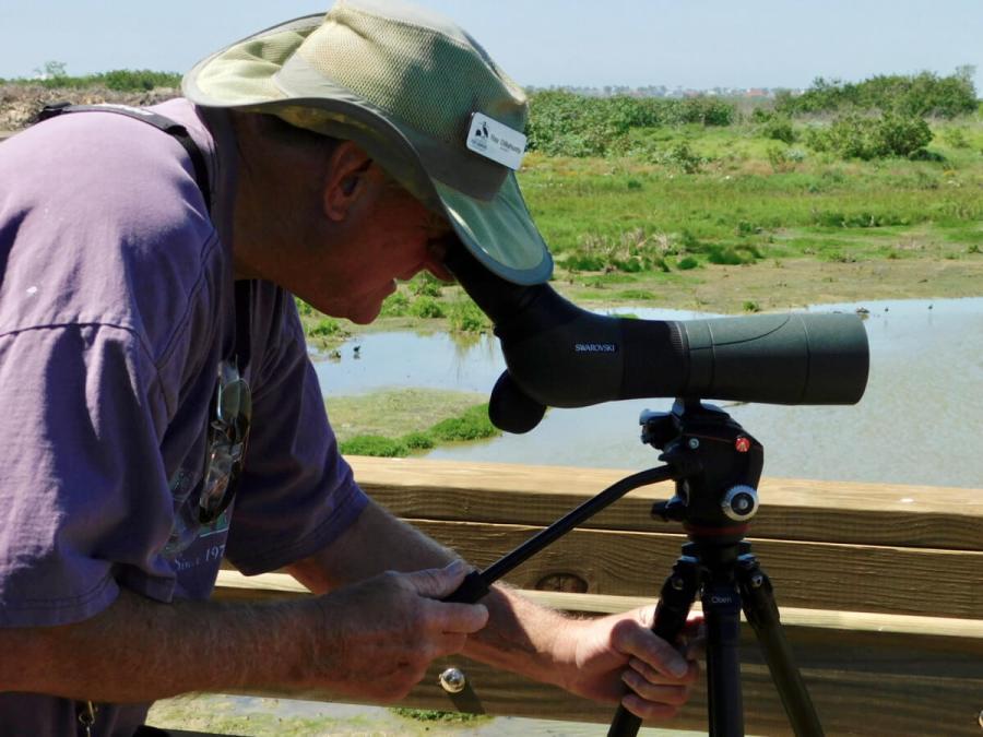Texas border bird watching