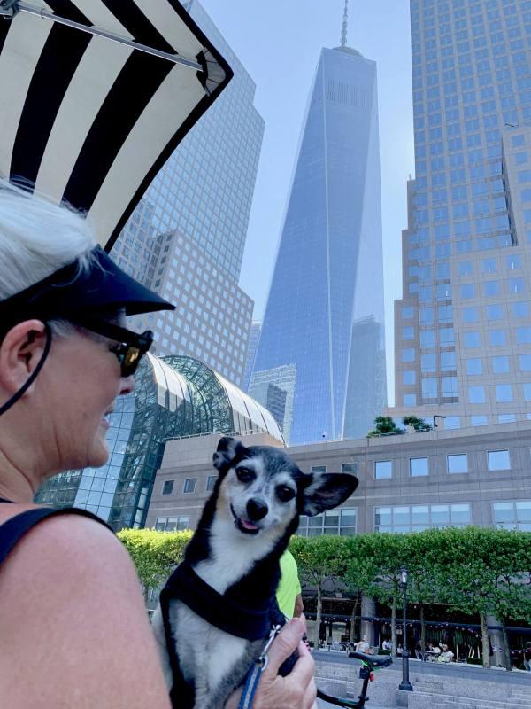 dog friendly New York City