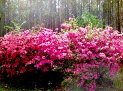 Mama's beautiful flowers