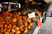 The pumpkins of 2012. Photo credit: The Swiss Watch Blog