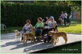 Service dog Switzerland