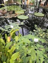 bothanic_garden_in_helsinki