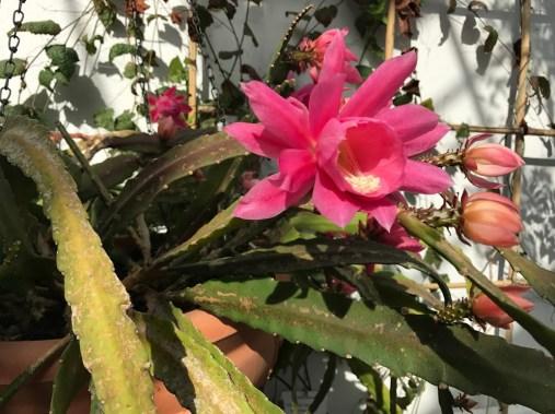 flowers_bothanic_garden_helsinki