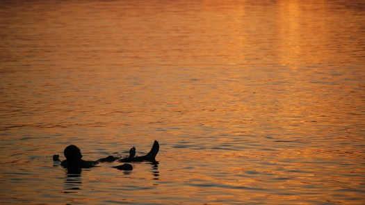 A person floating in the Dead Sea, Jordan at sunset
