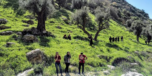 Hikers in front of olive trees