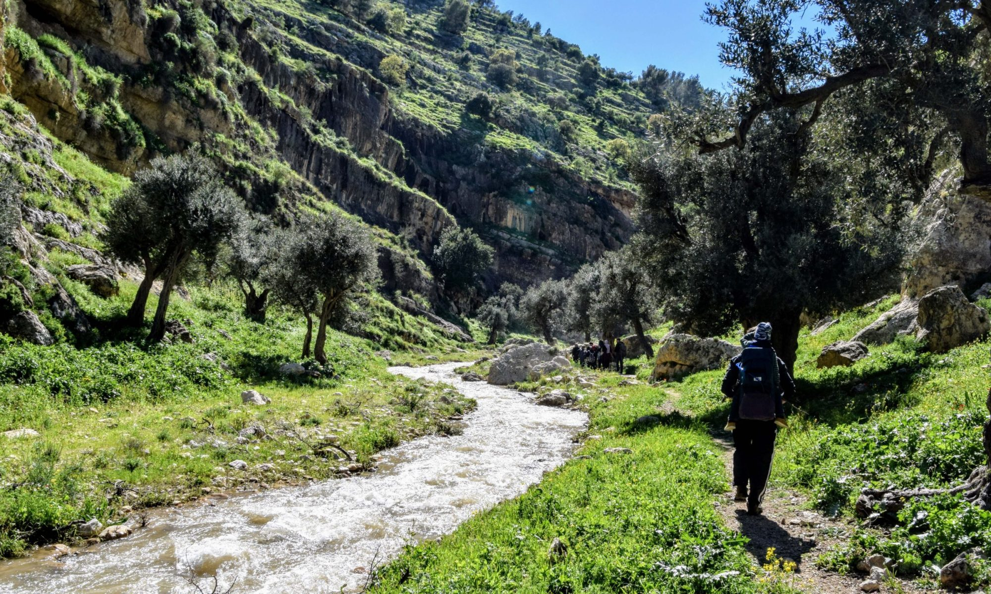 hikers going along a creek through a valley with olive trees and mountains