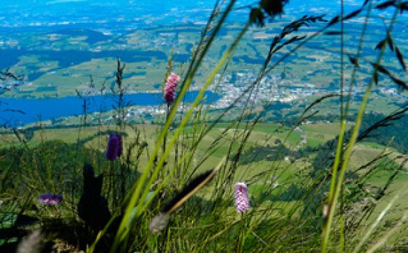 The flora of Mount Rigi, Central Switzerland