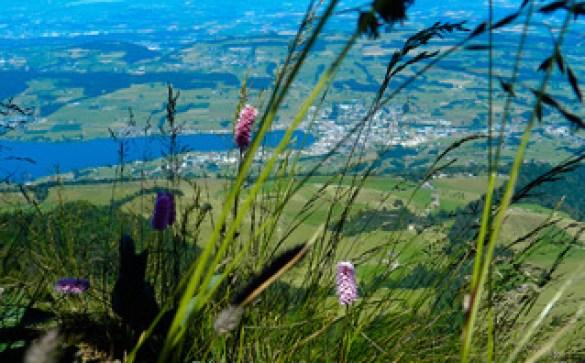 The flora of Mount Rigi, Central Switzerland