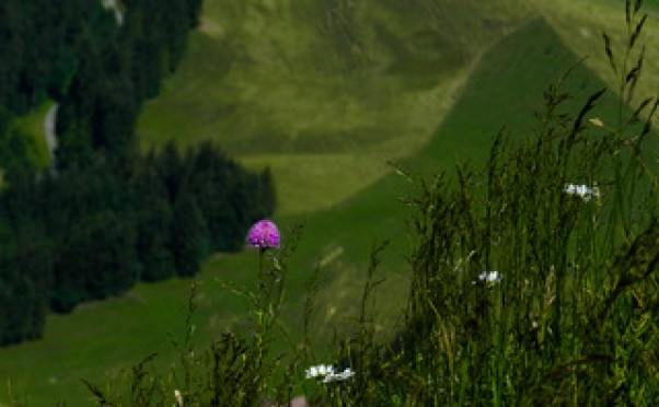 The flora of Mount Rigi, Centrall Switzerland