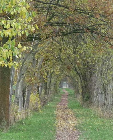 Pilgerweg bei Marienfeld.
