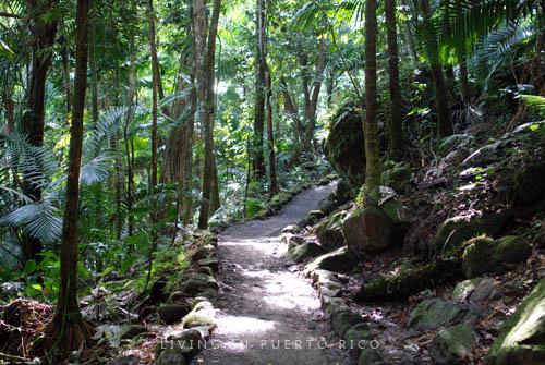 Mina Trail El Yunque