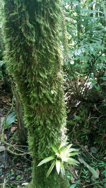 El Yunque Hiking Trail - Ferns