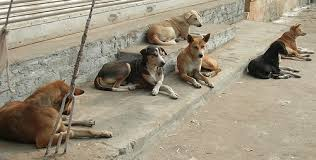 Stray dogs in Puerto Rico