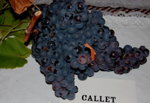 A native Mallorcan grape variety, Callet is for wine - not for New Year's Eve. Buy small, sweet and seedless grapes for easier gulping!