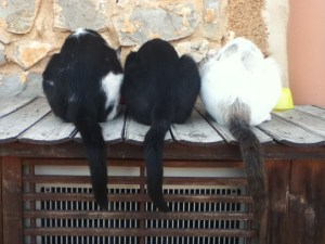 Beamer, Bear, and Dusty dine at the finca.