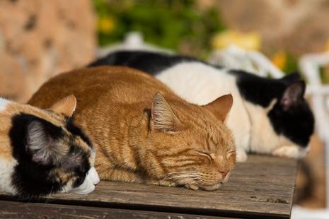 Snoozing cats