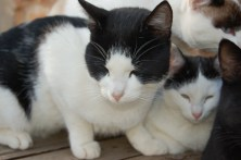 Chico (right) as a kitten with his big brother Beamer