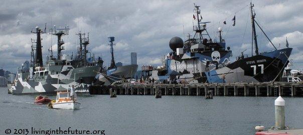 sea-shepherd-steve-irwin-melbourne-seaworks