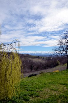 PIemontese countryside from house