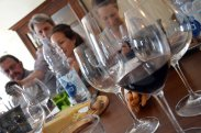 Wine vineyard Novello