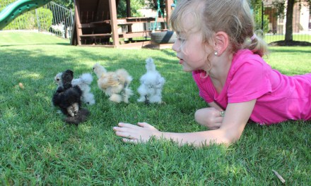 Chickens and Brielle
