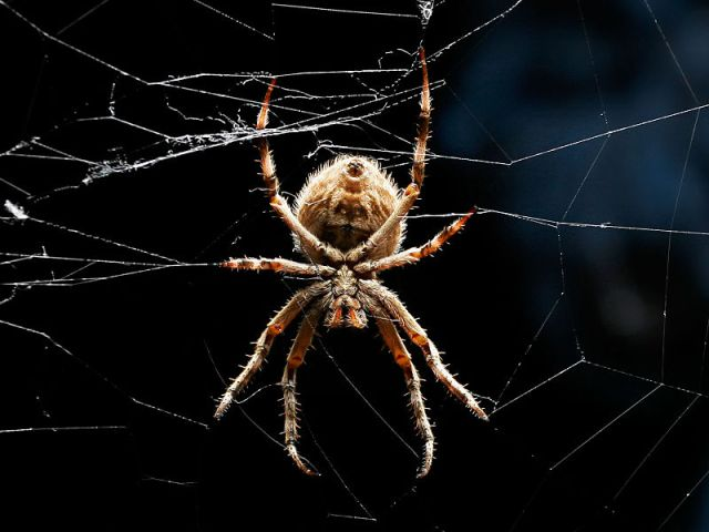 Spider of Celtic Myth